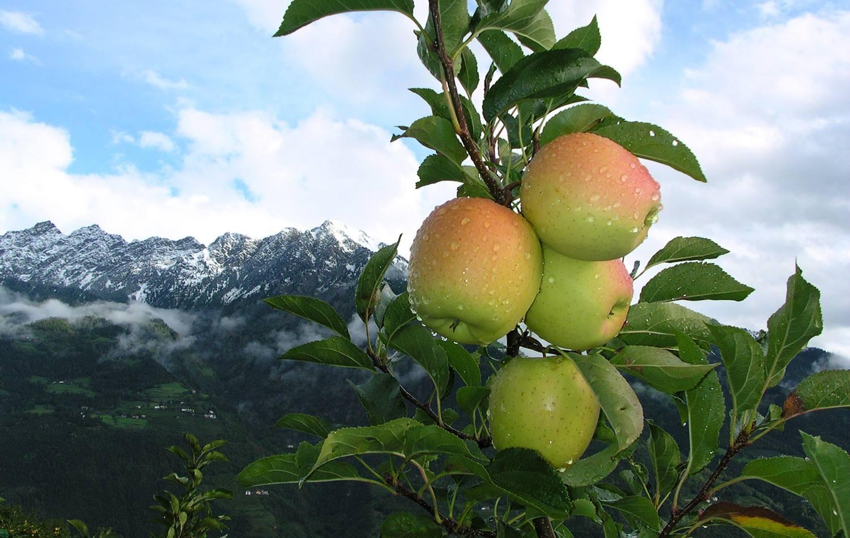 Apfel-Schnee-1